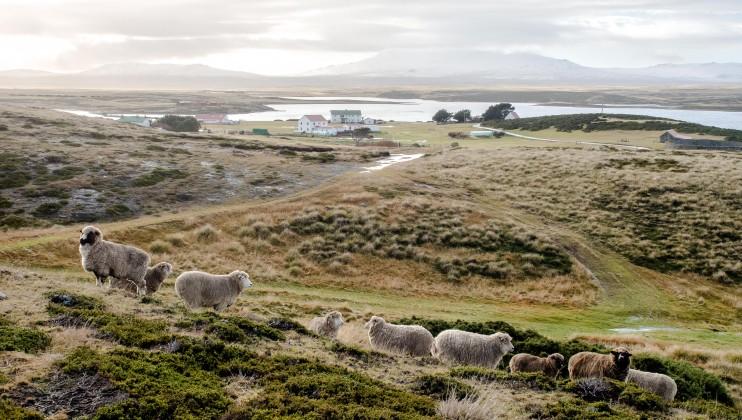 Falklands/Malvinas