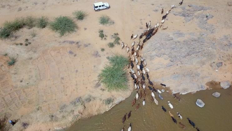 Vue aérienne du troupeau de bêtes de l'éleveur Boubacar Moukaila qui traversent la rivière pour se rendre au parc de vaccination du CICR