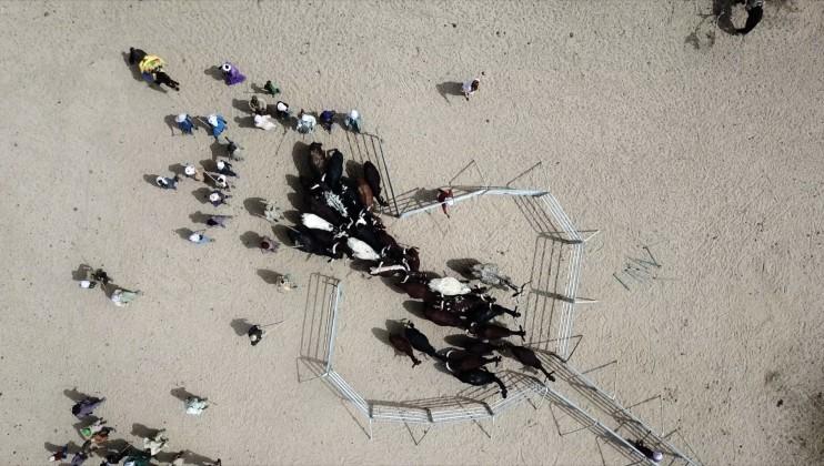 Vue aérienne d'un troupeau de boeufs qui entrent dans un enclos pour se faire vacciner.
