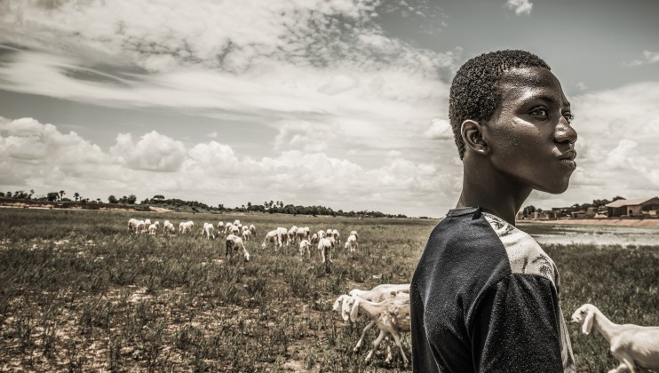 Mamadou's herd grazes on the bed of the Yamé River. It is the full rainy season in August, but the Yamé river, a tributary of the Niger, is still dry.   Samuel Turpin/ICRC  Part of Humans & Climate Change documentary project.